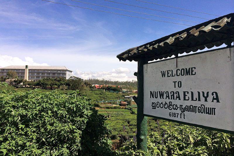 スリランカより クオリティーシーズンのヌワラエリアが入荷しました